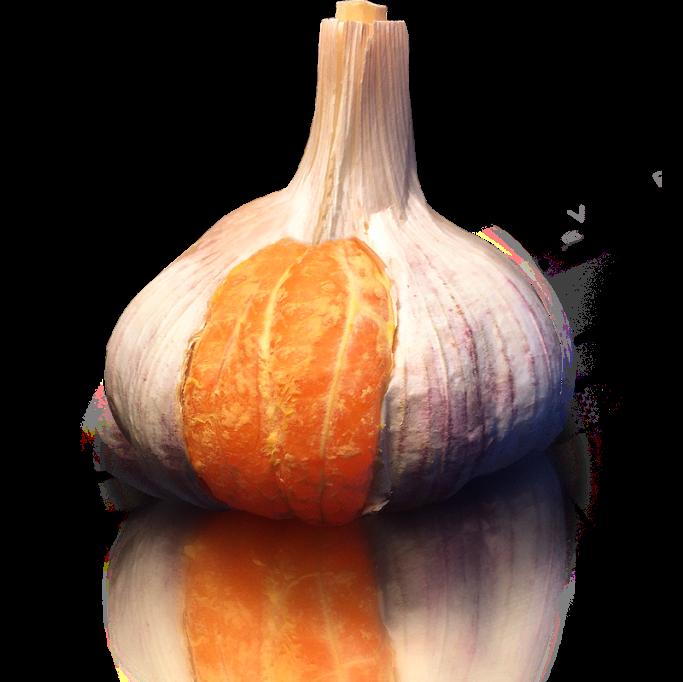 laranja-servicos